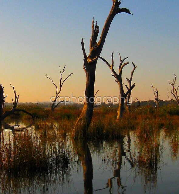 Morning shadows and dead Trees by cjcphotography