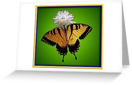 Swallowtail by glink