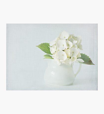 Little white jug Photographic Print
