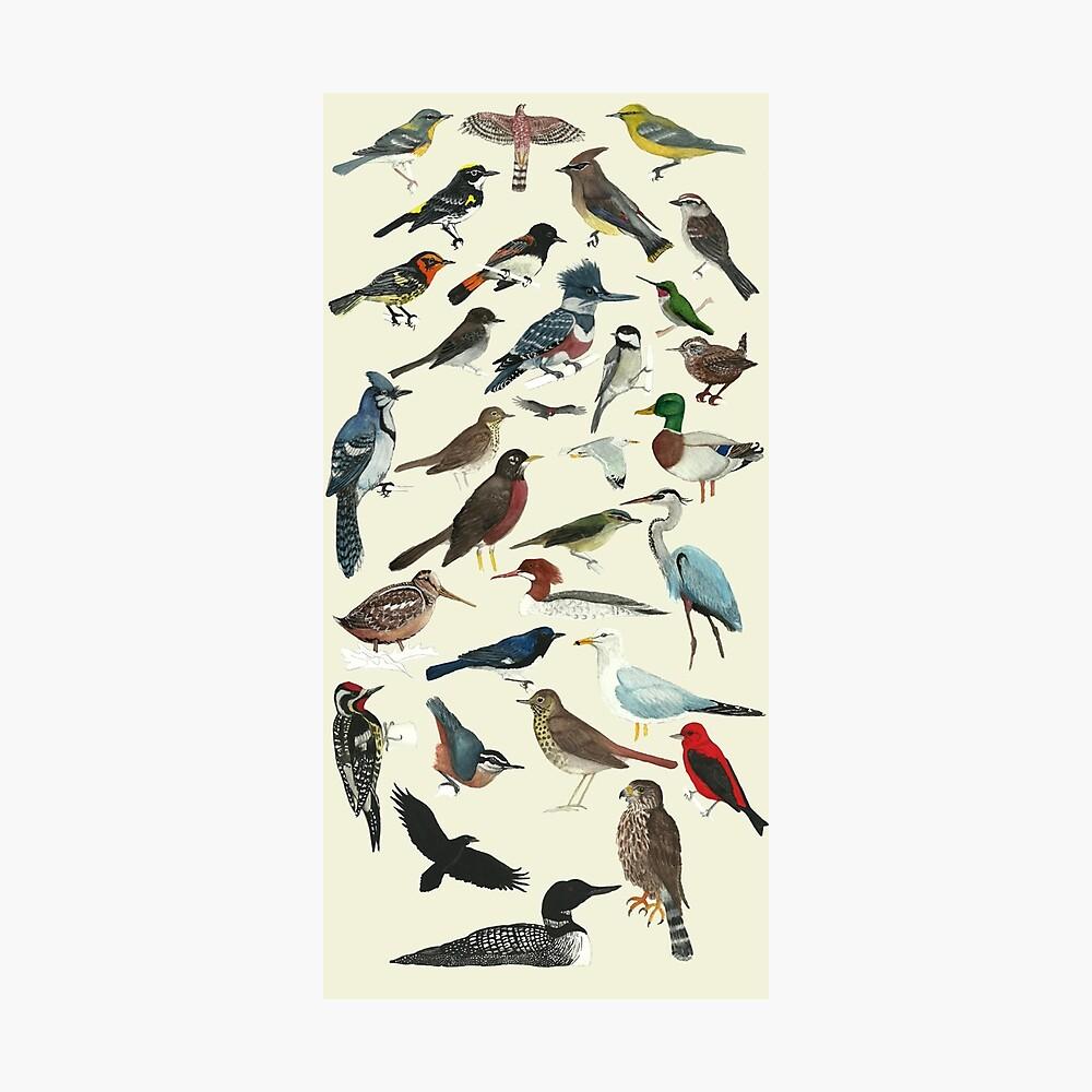 Bird Fanatic Photographic Print