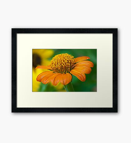 The Orange and Green Framed Print
