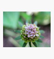 Launchpad Flower Photographic Print