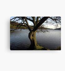 Rudyard lake tree Canvas Print
