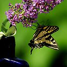SWALLOWTAIL BUTTERFLY by RoseMarie747