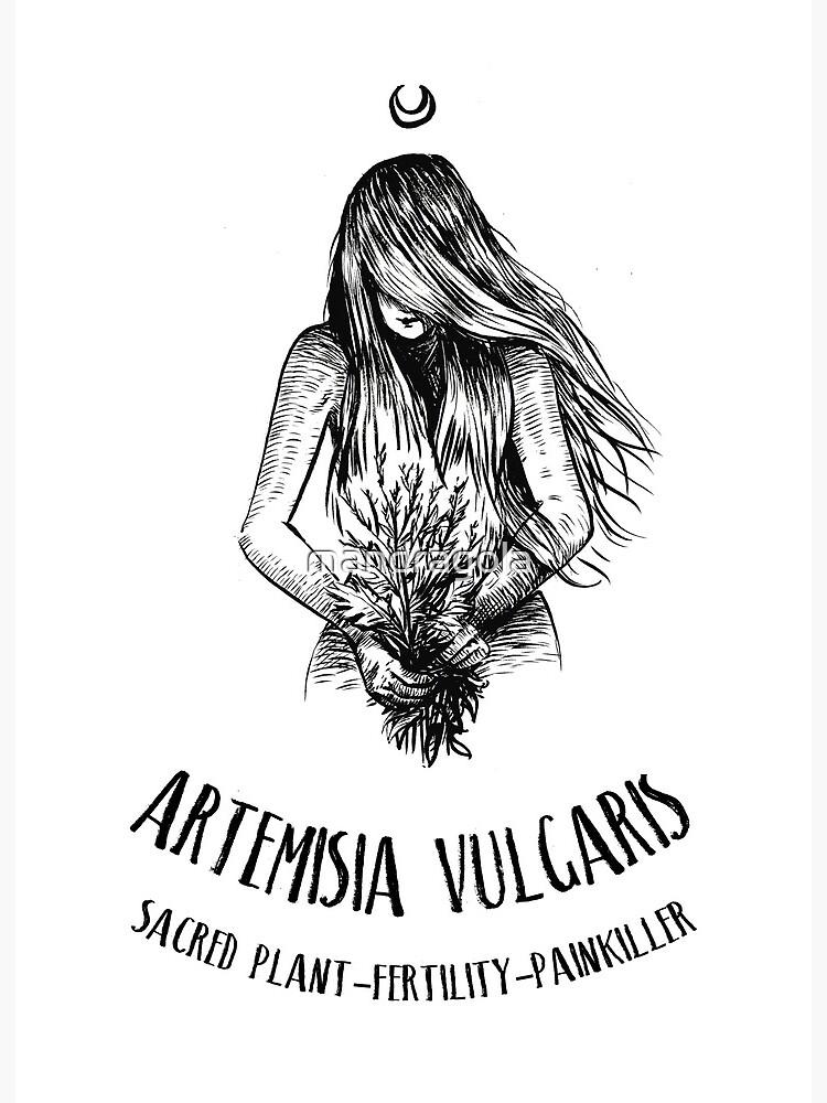 Artemisia Vulgaris Mugwort Illustration Witchcraft Antique Botanical Prints Magic Plant Print Witch Home Decor Art Board Print By Mandragola