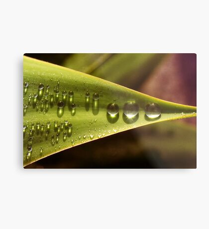 Raindrops in a Row Metal Print