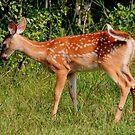 Deerly Beloved by Larry Trupp
