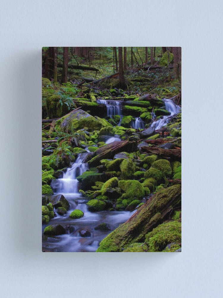 Alternate view of Forest Voices Canvas Print
