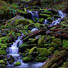 Forest Voices by Robert C Richmond