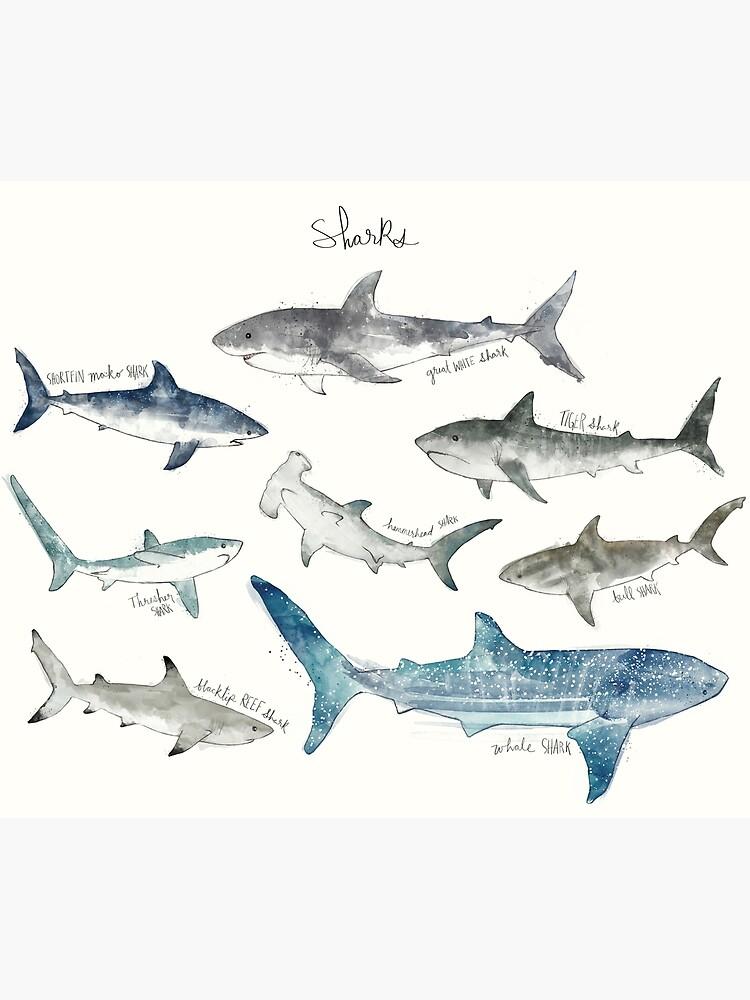 Sharks - Landscape Format by AmyHamilton