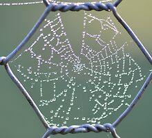 Rainbow Web by MissyD