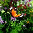 butterfly 3 by junebug076