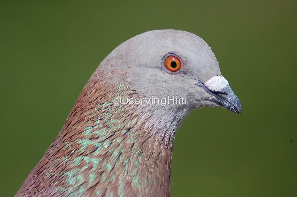 Pigeon by dwservingHim
