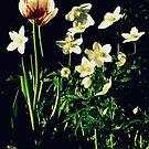 Shadow Garden by eleveneleven