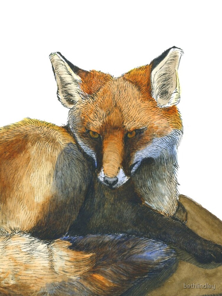 Fox in Ink and Watercolour by bethlindley