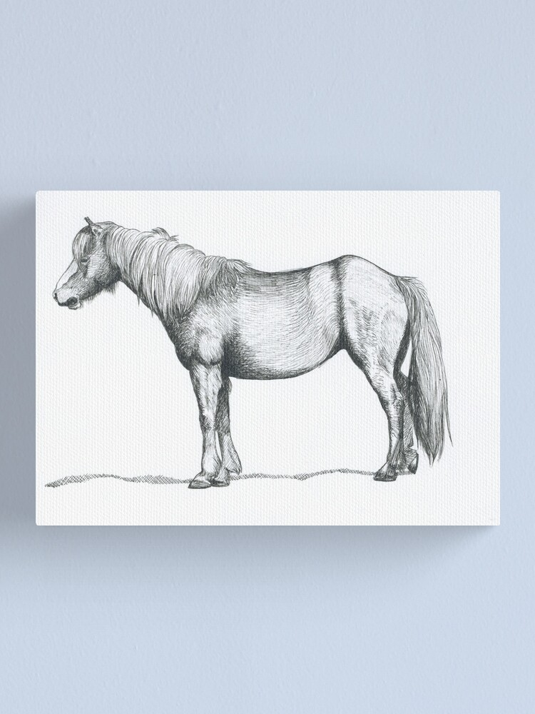 Alternate view of Welsh Mountain Pony Illustration Canvas Print