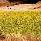 Flowers and Horses in Rural Spain near Setenil de las Bodegas Cadiz by Mal Bray
