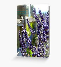 Sequim Lavender Greeting Card