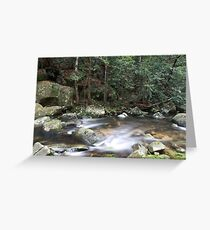 Washpool National Park, NSW, Australia Greeting Card