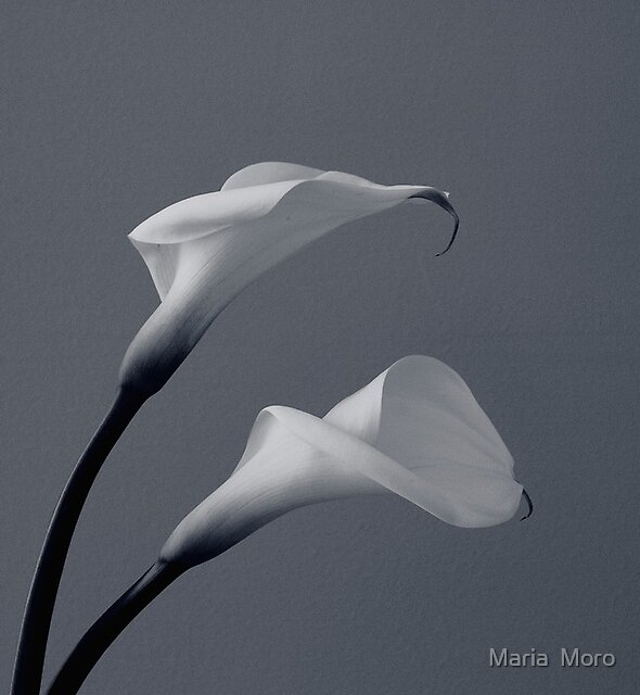 ~ Sway ~ by Maria  Moro
