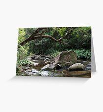 Washpool National Park Greeting Card