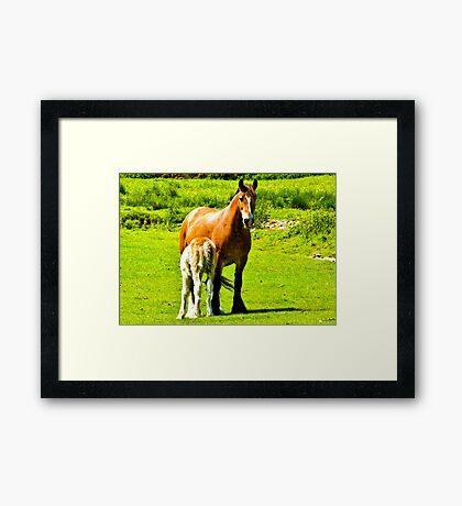 Mother & Foal Framed Print