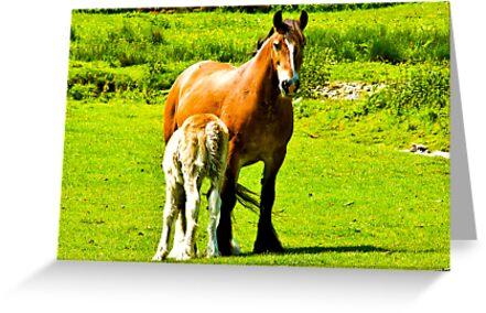 Mother & Foal by Trevor Kersley