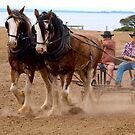 Working Horses - Easter  2019 by Bev Pascoe