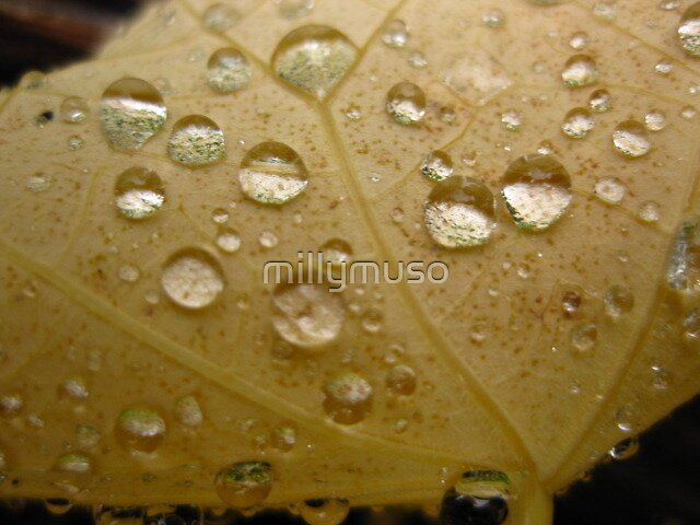 rain by millymuso