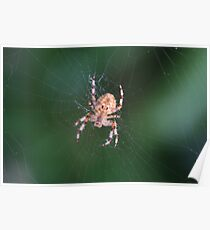 Spider 0790 Poster