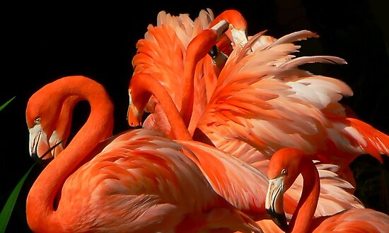 A Bouquet of Fluffy Flamingoes by paintingsheep