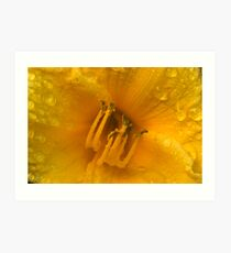 Yellow rose extreme closeup Art Print