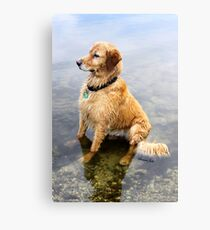 Wet Dog ~ Cooling Off At the Lake Canvas Print