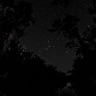 Constellation of Orion through the trees by BigAndRed