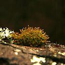 lichen and moss by canonsnapa