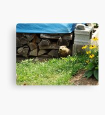 How Much Wood Can This Woodchuck Chuck? Canvas Print