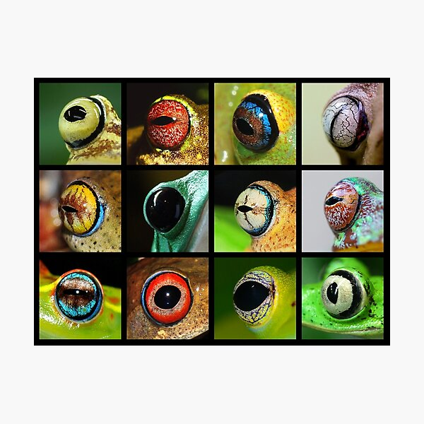 A Rainbow of Frog Eyes Photographic Print