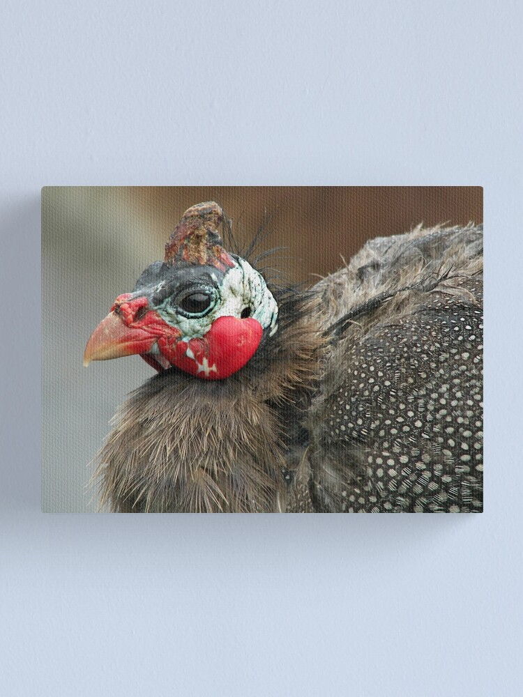 Alternate view of Bedraggled Canvas Print