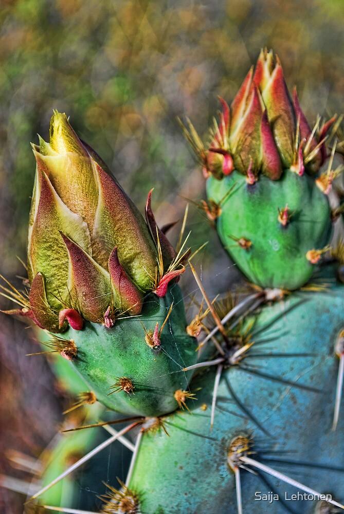 Prickly Pear Cactus Blooms by Saija  Lehtonen