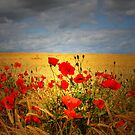 MY LOVELY POPPY FIELD by leonie7