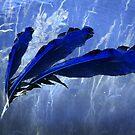 Ink River by MigBardsley