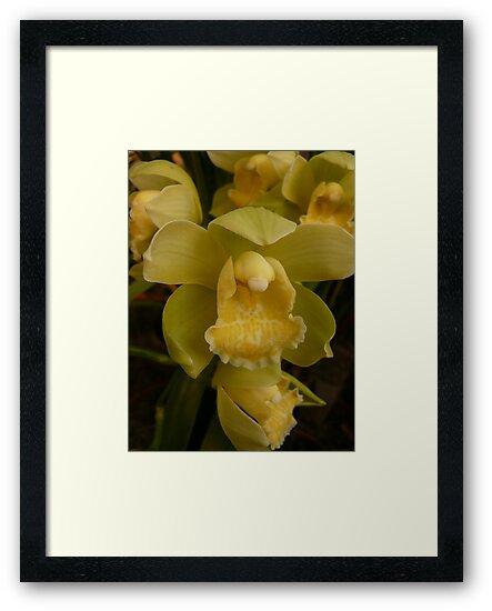 Season 2010 Orchid 3 by beeden