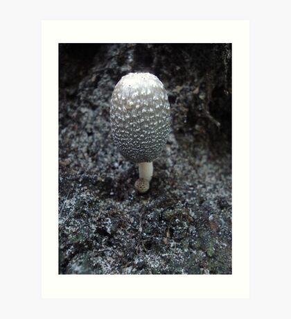 Mushroom on Magnolia Art Print