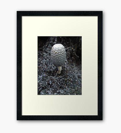 Mushroom on Magnolia Framed Print