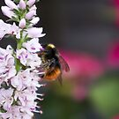 Let it Bee by Steve plowman