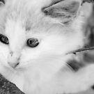 Little Grey Ferguson by AbsintheFairy