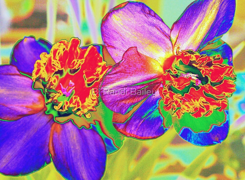 Colorful daffodils by ♥⊱ B. Randi Bailey