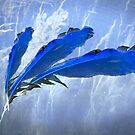 Feathers of Joy on the Blue River by MigBardsley
