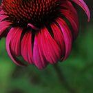 Stray flower in bloom by AbsintheFairy
