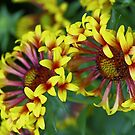 Red and yellow by Steve plowman